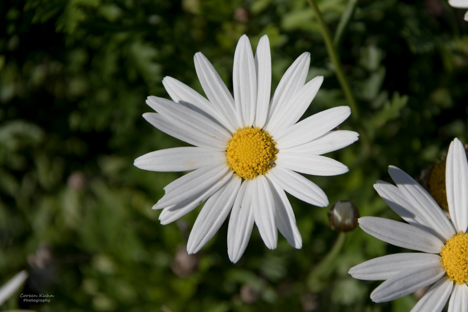 Cee's Flower Of The Day Challenge: 20 November2020