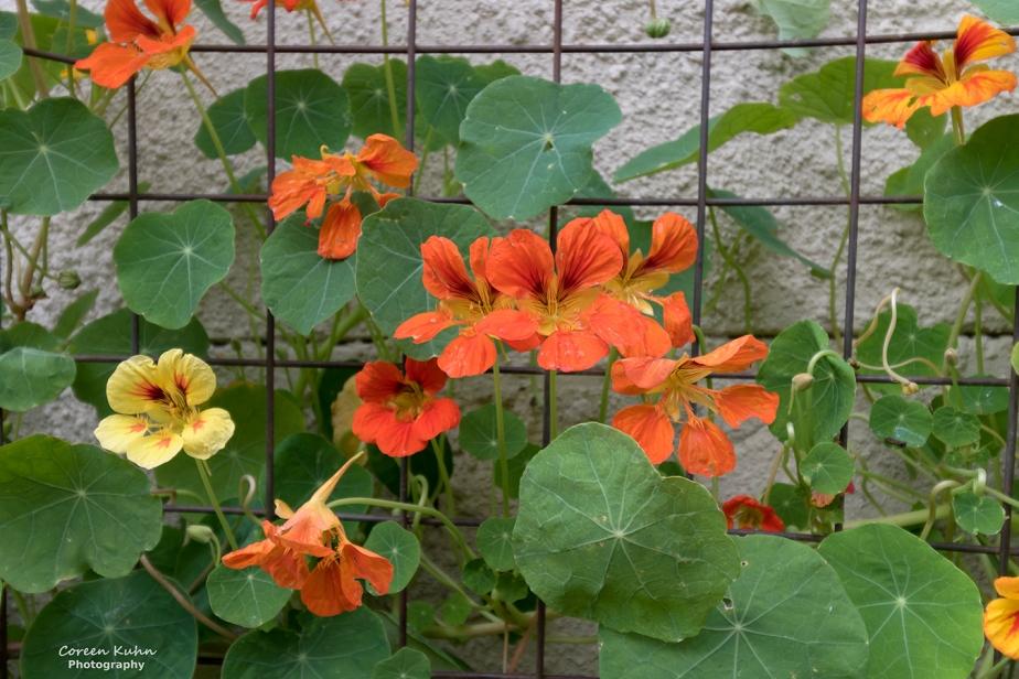 What's In My Garden:#81