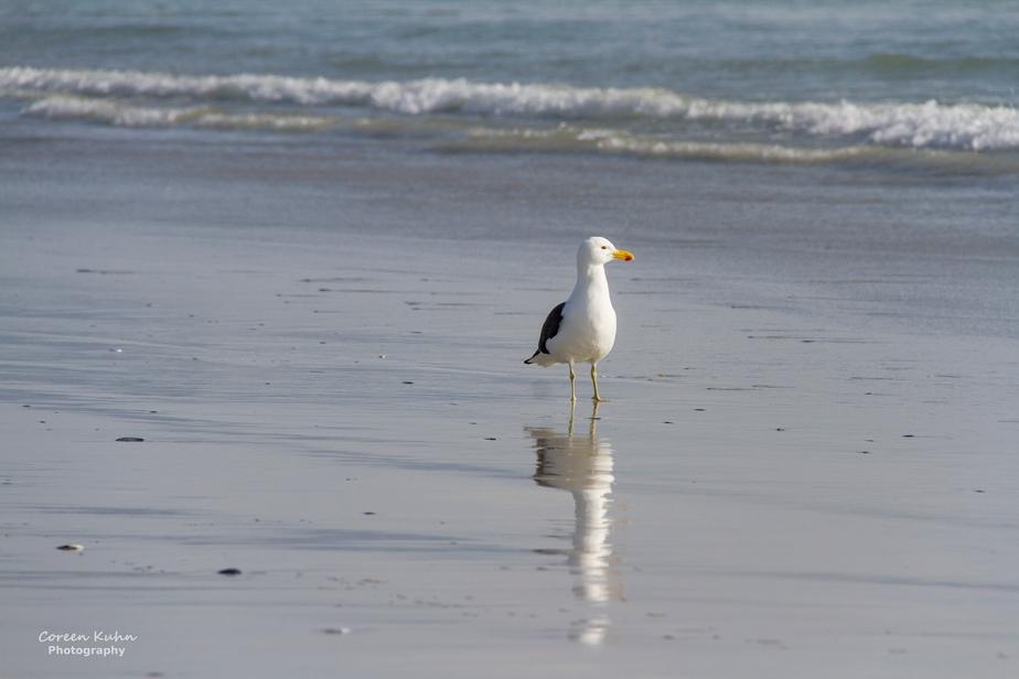 Tuesday Beach Vibes: 19 January2021