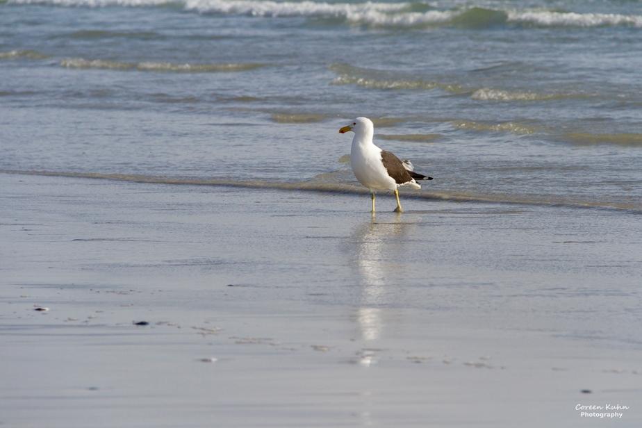 Tuesday Beach Vibes: 22 December2020