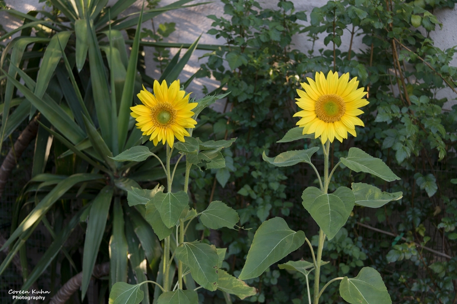 Cee's Flower Of The Day Challenge: 8 January2021