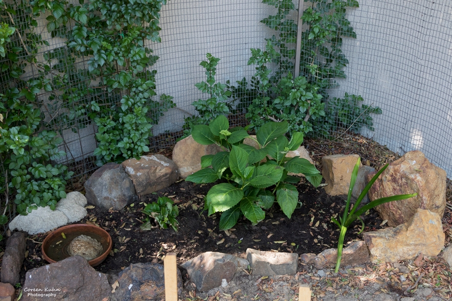 What's In My Garden?#137