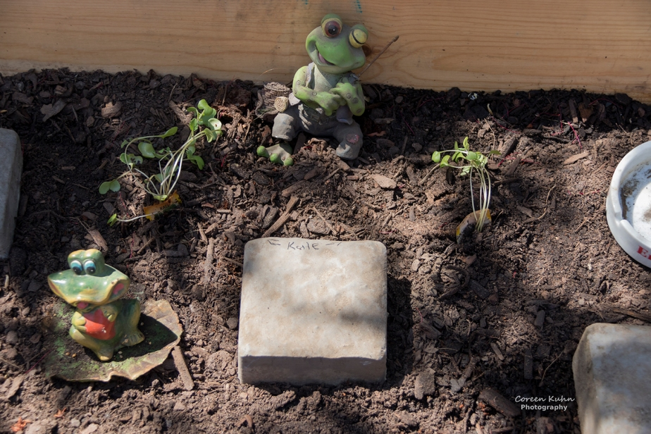What's In My Garden?#138