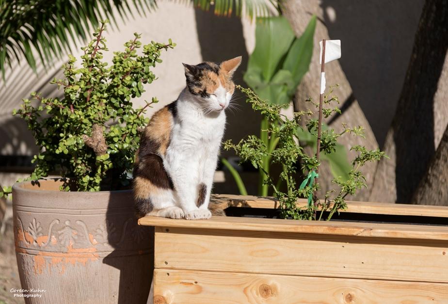 What's In My Garden?#121