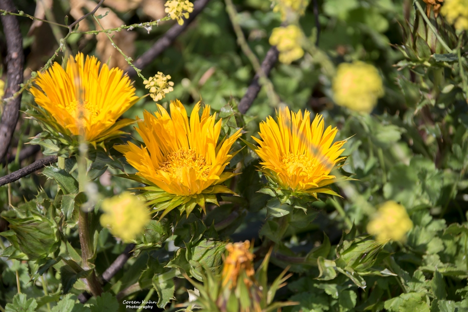 Fauna and Flora Friday: 26 February2021