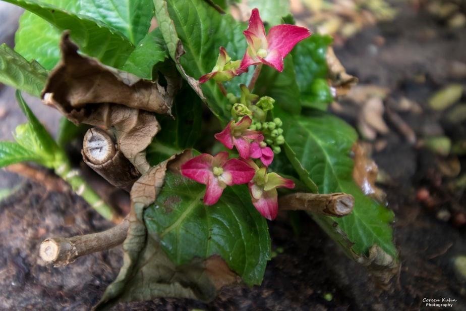 What's In My Garden?#171