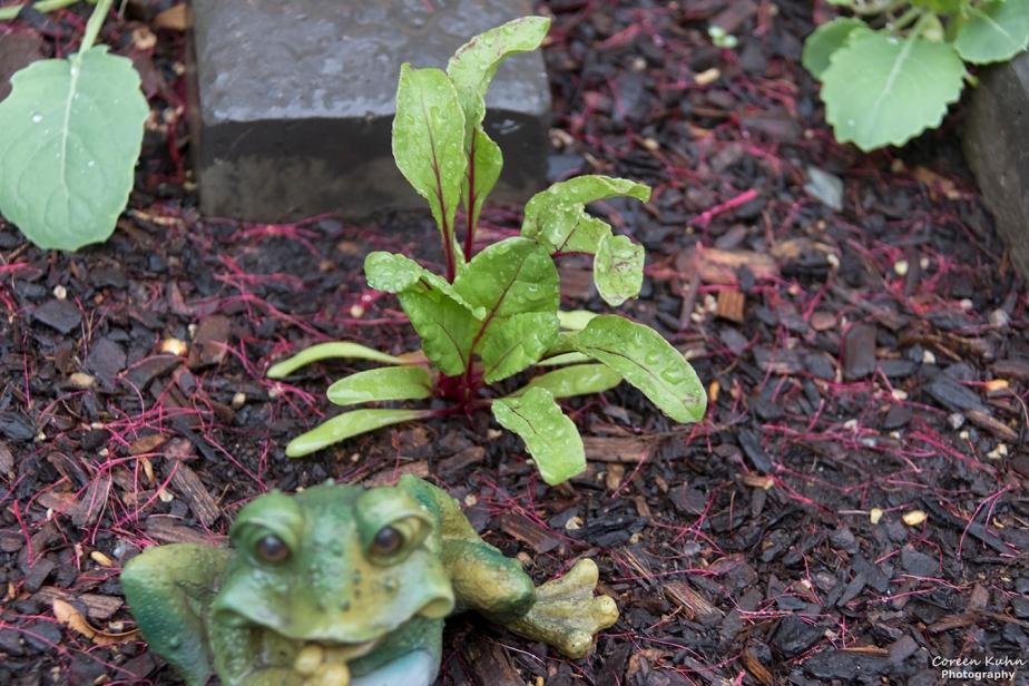 What's In My Garden?#205