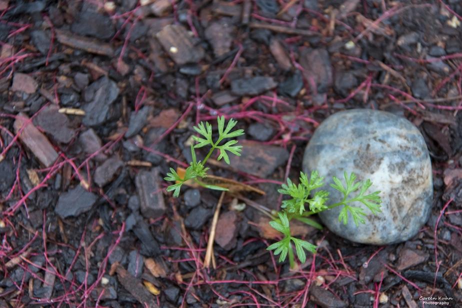 What's In My Garden?#208
