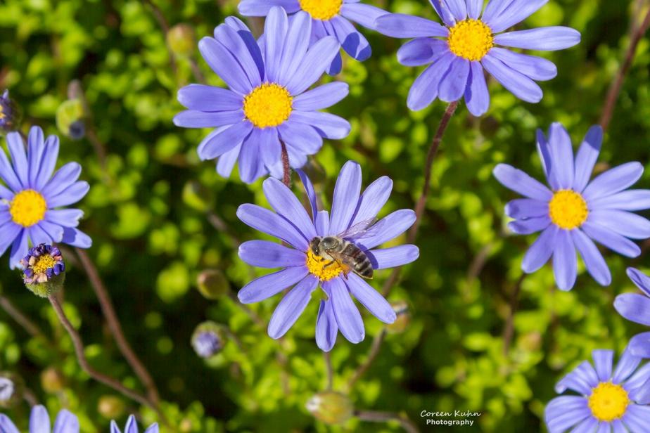 Fauna and Flora Friday: 28 May2021