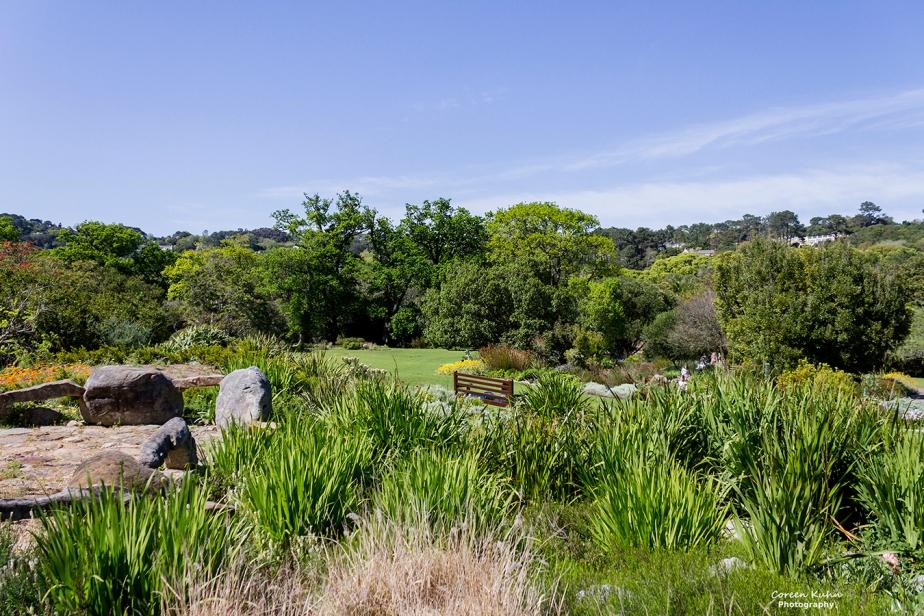 Saturday Landscapes: 19 June2021