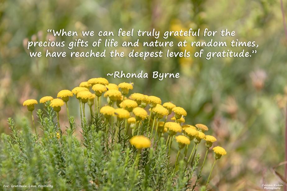 Gratitude. Love. Positivity: 29 July2021