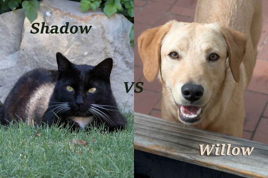 Shadow vs WillowUpdate