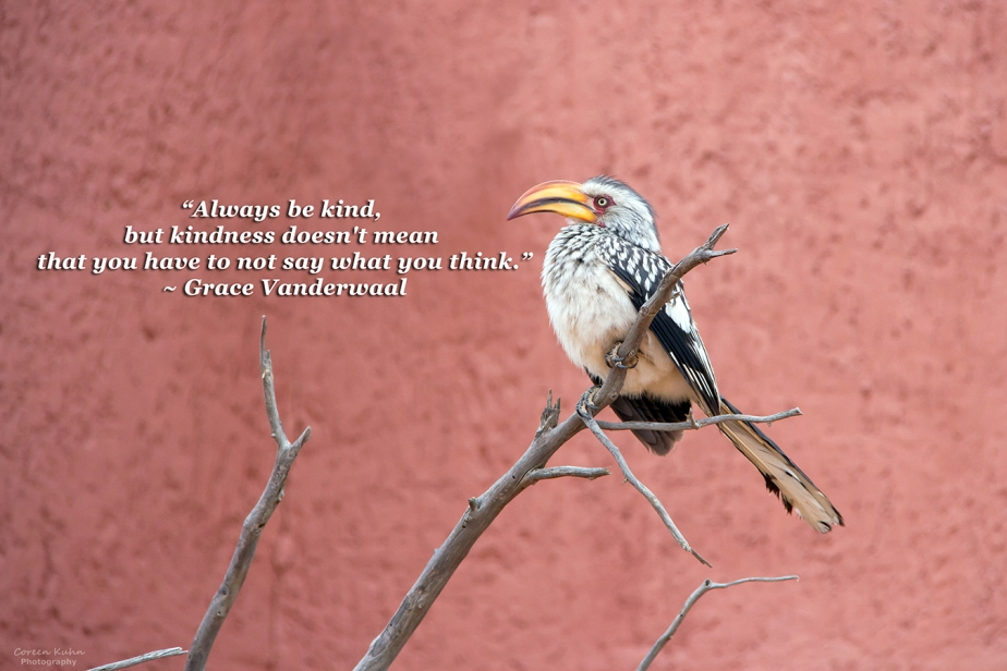 My Photo Someone's Quote: 1 August2021