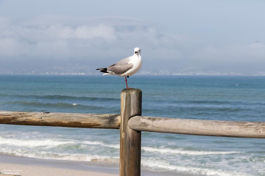 Tuesday Beach Vibes: 24 August2021