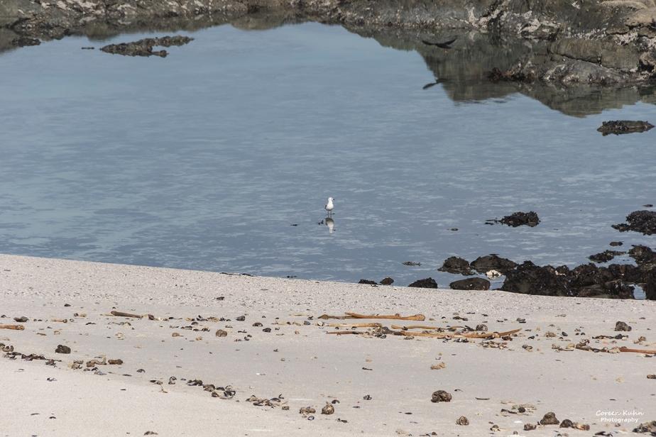 Tuesday Beach Vibes: 31 August2021