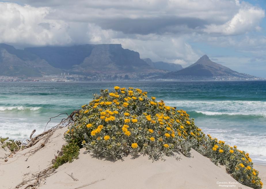Tuesday Beach Vibes: 6 July2021