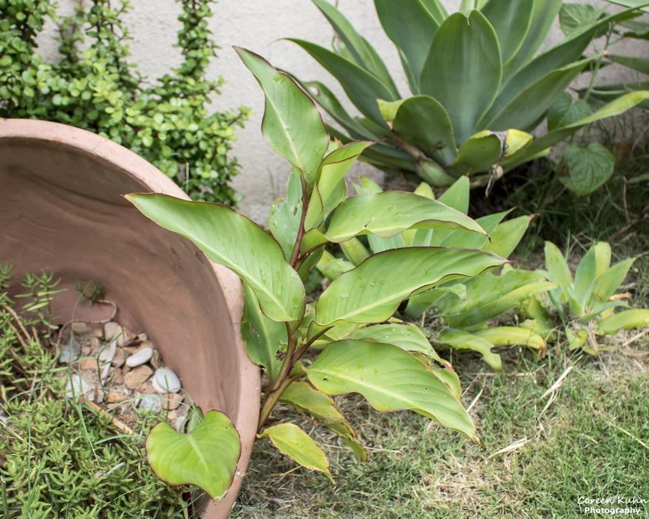 What's In My Garden? 12 August2021