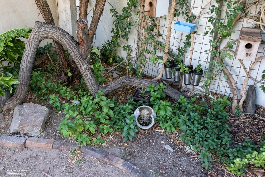 What's In My Garden? 16 July2021
