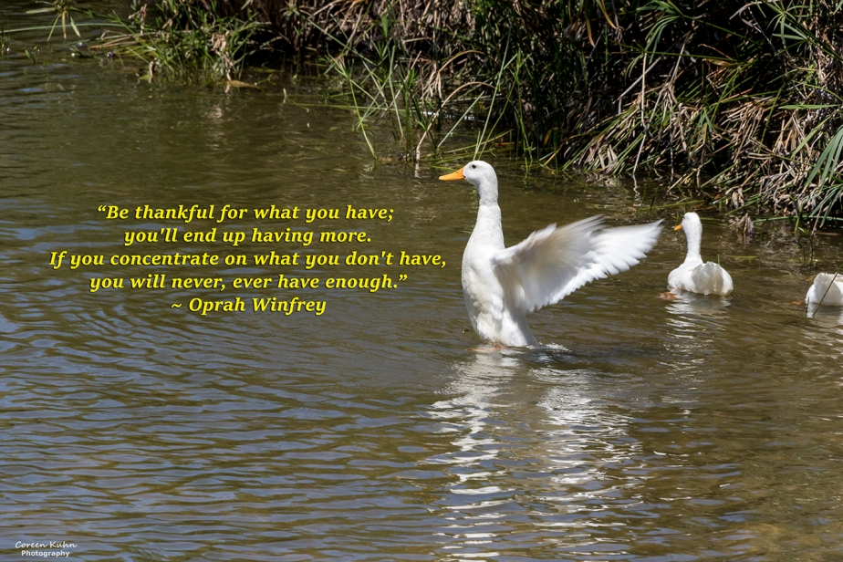 My Photo Someone's Quote: 15 July2021