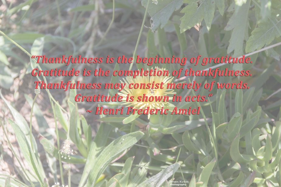 My Photo Someone's Quote: 18 July2021