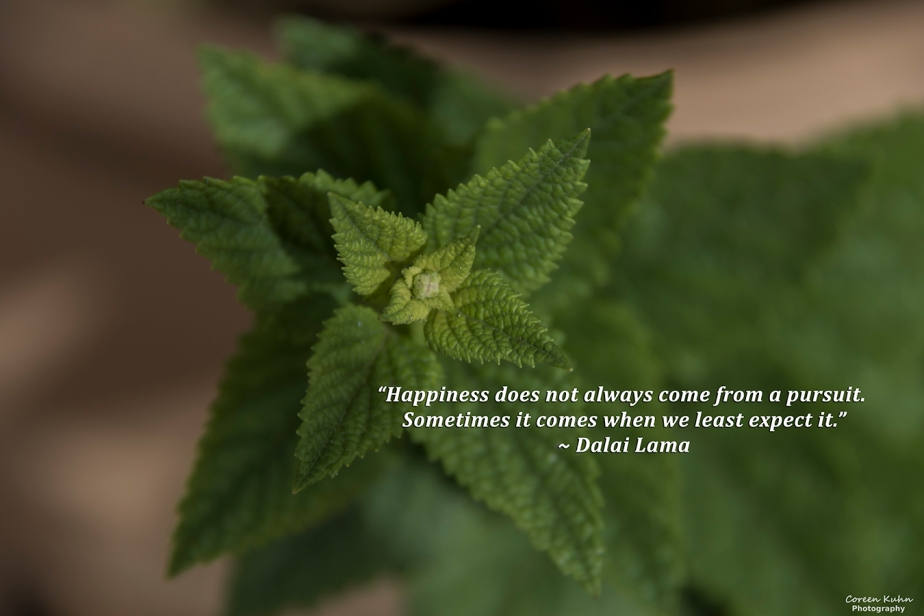 My Photo Someone's Quote: 19 July2021