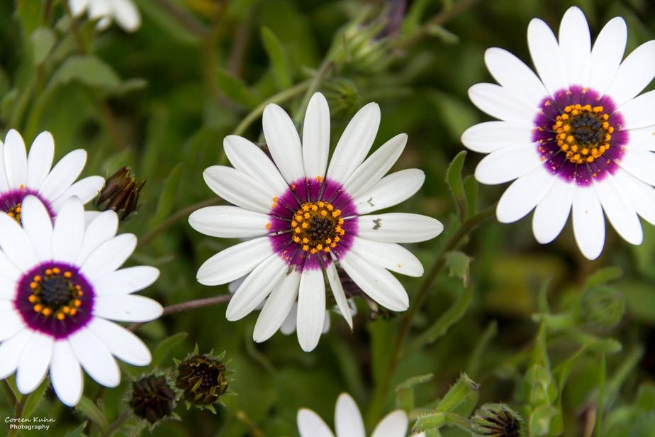 Cee's Flower Of The Day Challenge: 13 September 2021 – RainDaisy