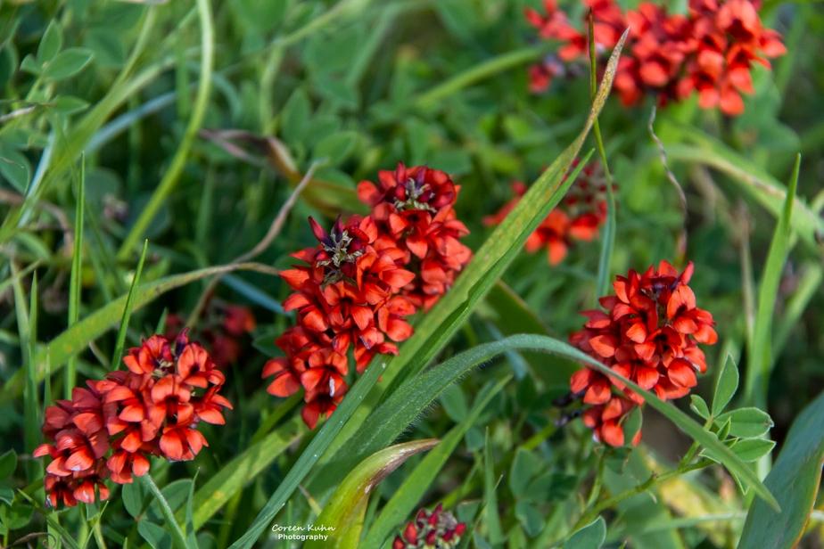 Cee's Flower Of The Day Challenge: 21 September 2021 –Indigo