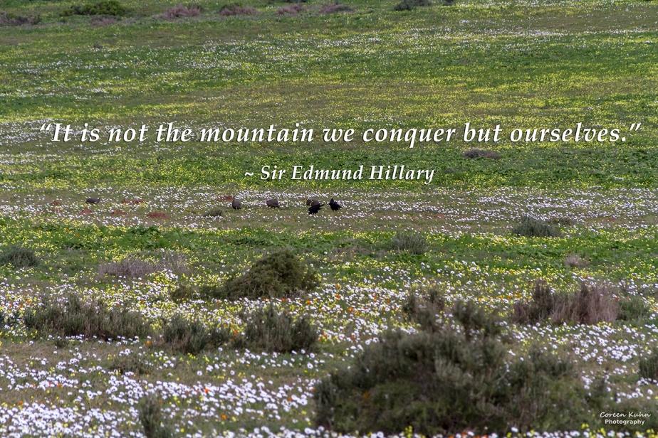 My Photo Someone's Quote: 7 August2021