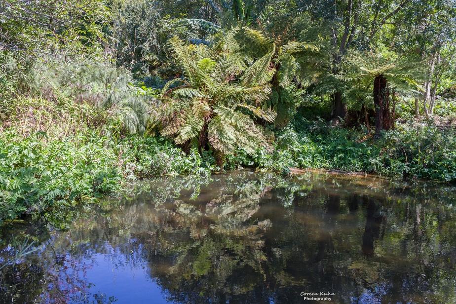 Kirstenbosch Botanical Garden – OtterPond