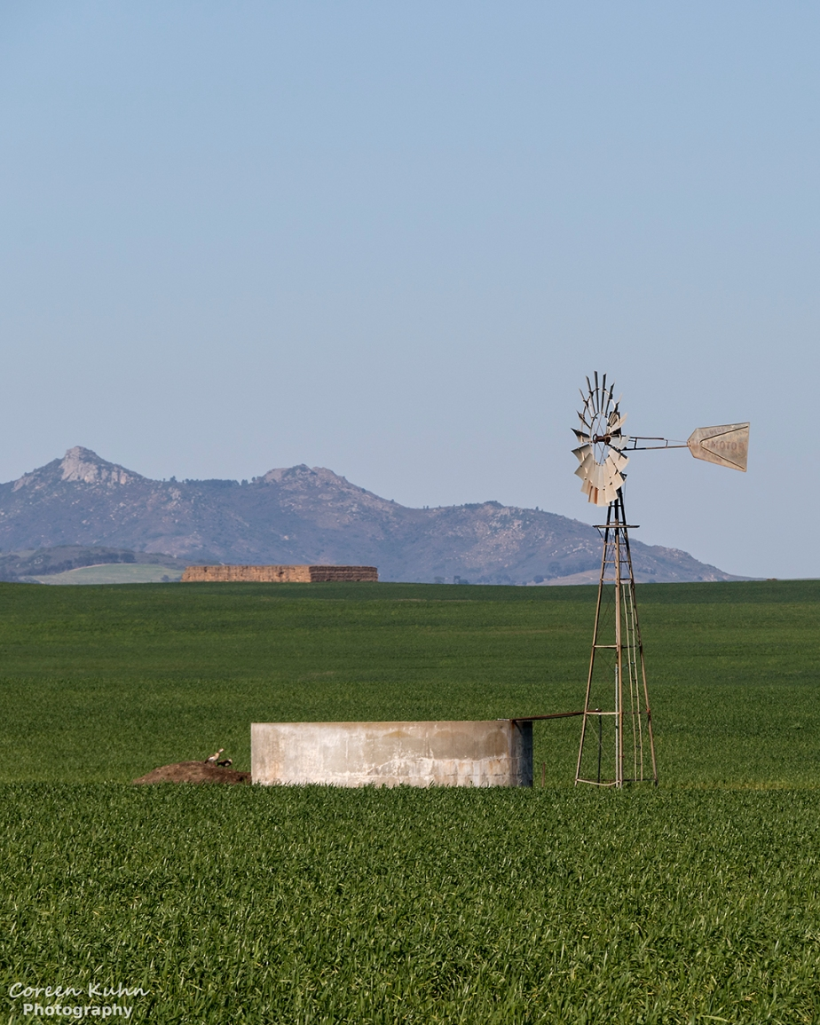 Views Along The R46 – Windmill in the Lucerne field#2