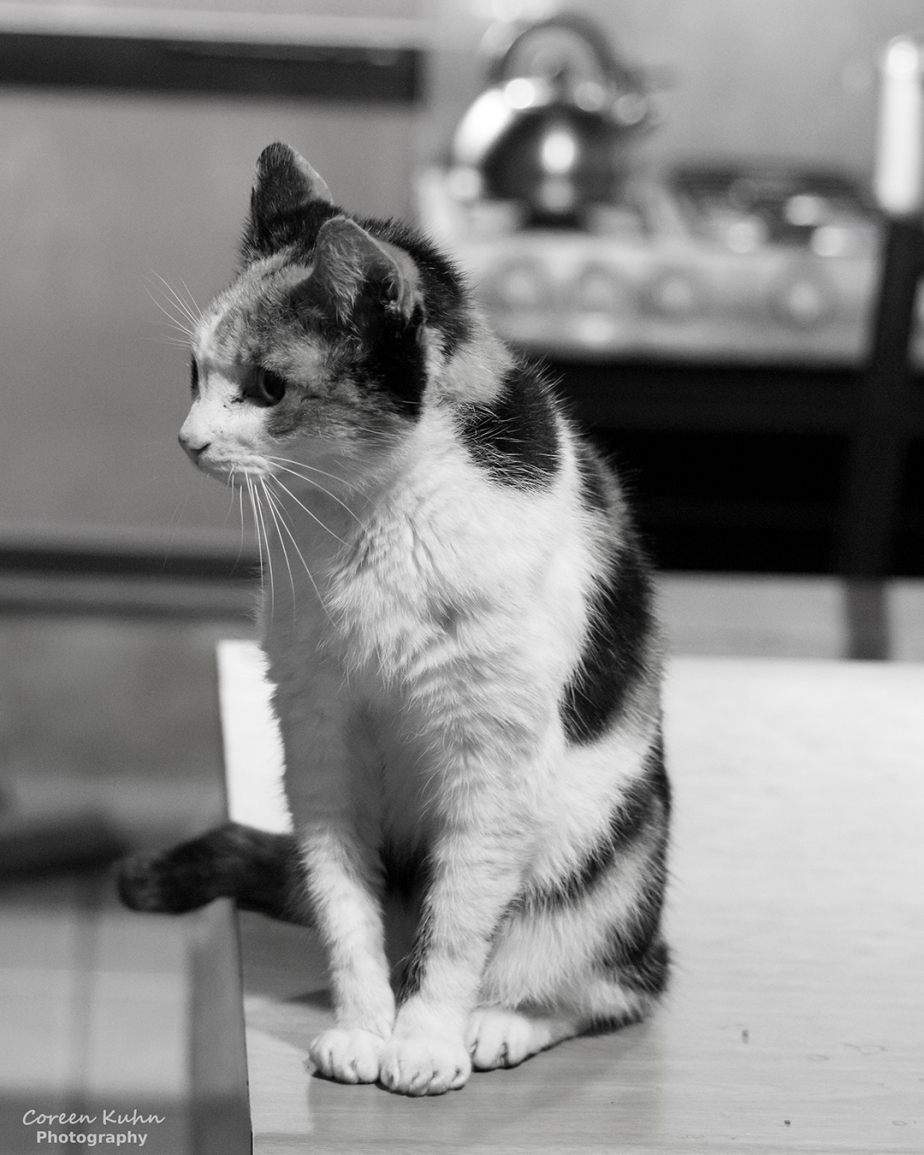 Black and White Photography: Ogies#2