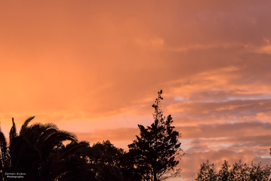 Backyard Sunset #1