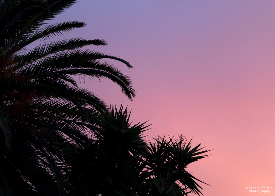 Backyard Sunset #2