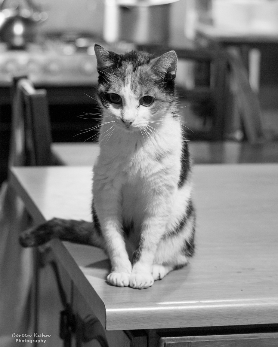 Black and White Photography: Ogies#1