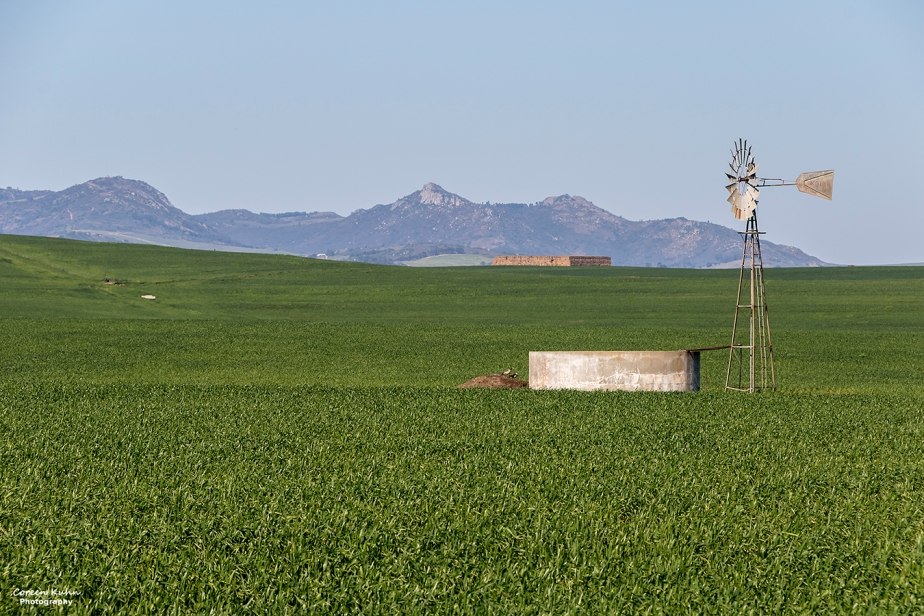 Views Along The R46 – Windmill in the Lucerne field#1