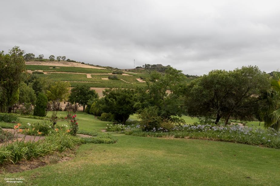 Rhebokskloof Wine Estate – Beautiful Landscapes#17