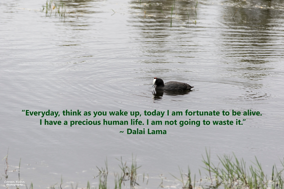 My Photo Someone's Quote: 24 October2021