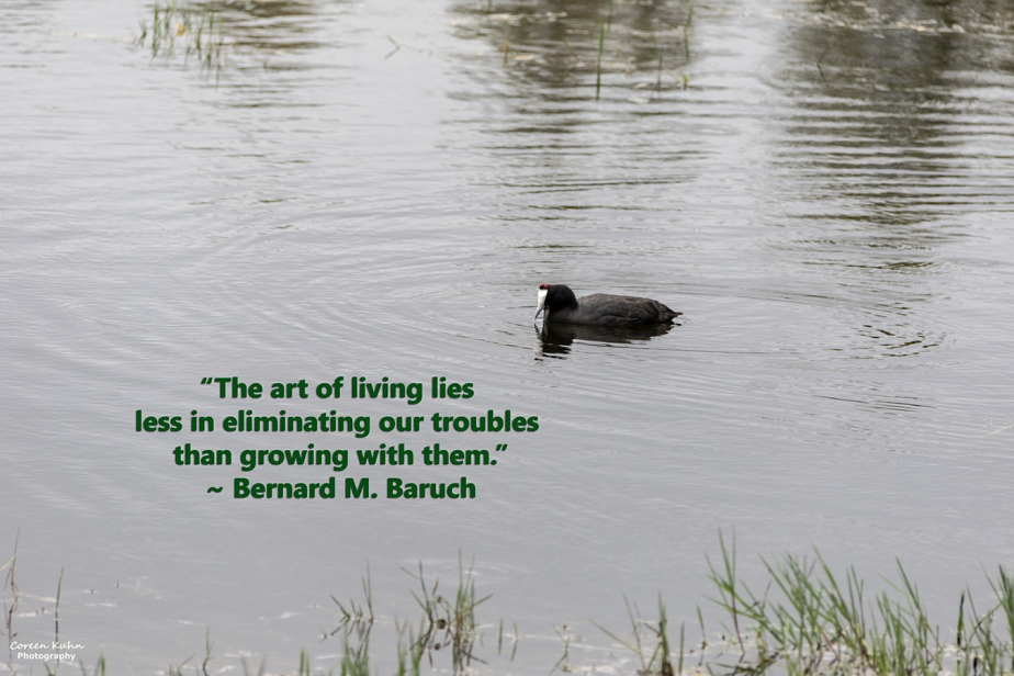 My Photo Someone's Quote: 27 October2021
