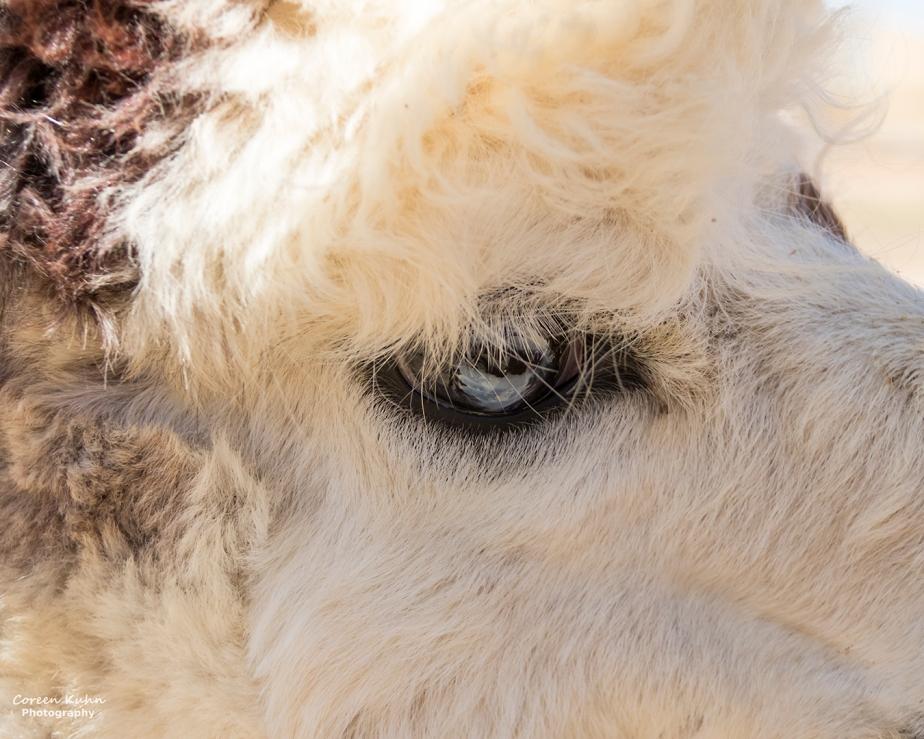 The Alpaca Loom#101