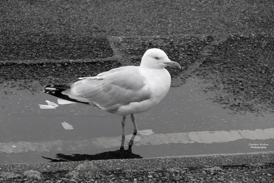 Black and White Photography: Stornoway#6