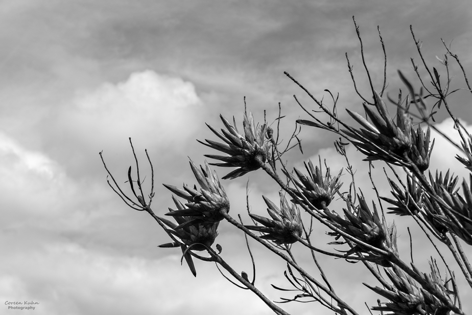 Black and White Photography: Durbanville Nature Reserve#1
