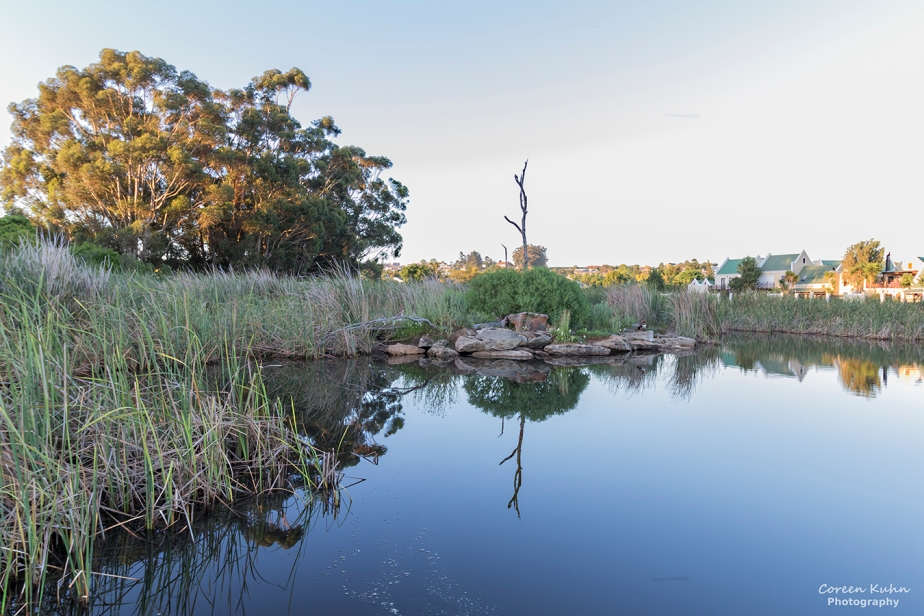 Botterblom Nature Reserve – 25 October2021
