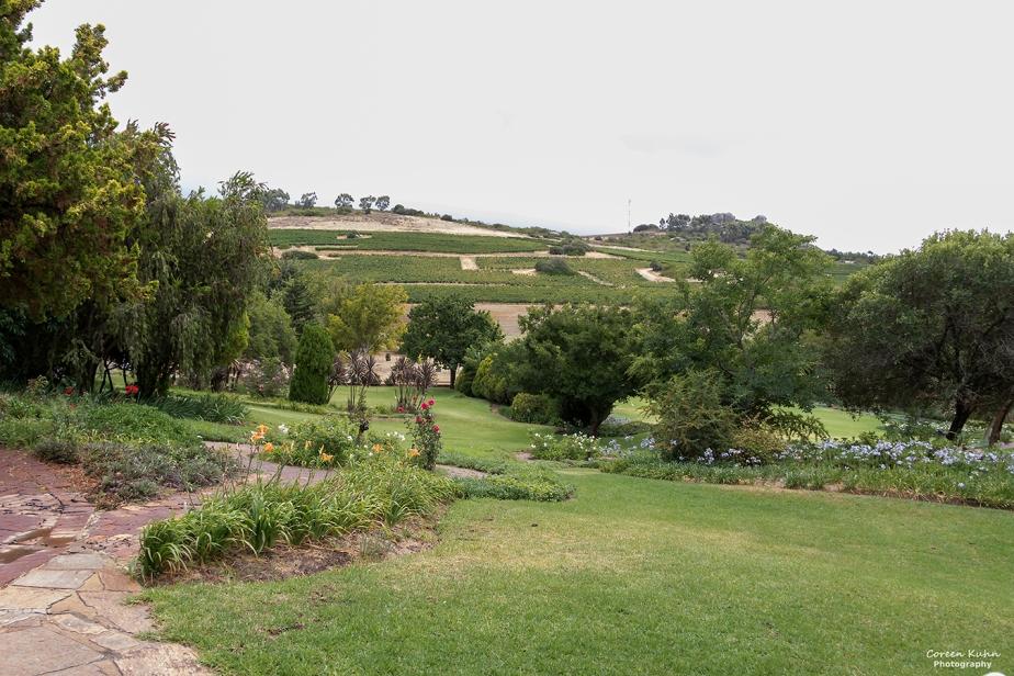 Rhebokskloof Wine Estate – Beautiful Landscapes#1